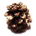 (1 bucata) Conuri de brad cuprate 10-13cm